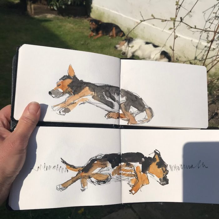 Rapid dog sketches 2019